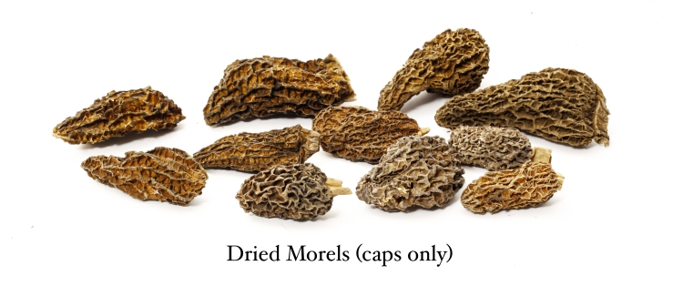 Morels when dried